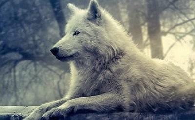 Os Lobos Internos